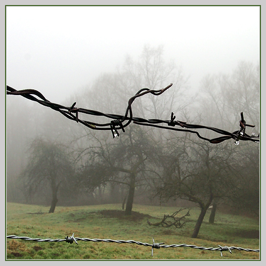 bäumeUdraht_I