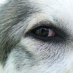 Bagira`s Eye