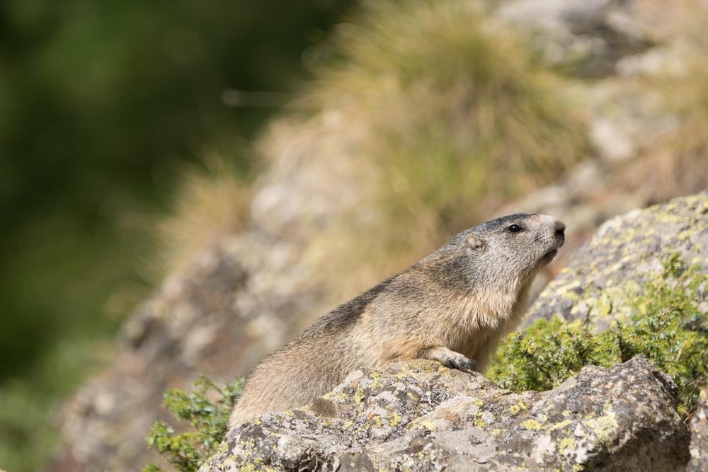 Bagni di sole foto % immagini animali mammiferi allo stato libero
