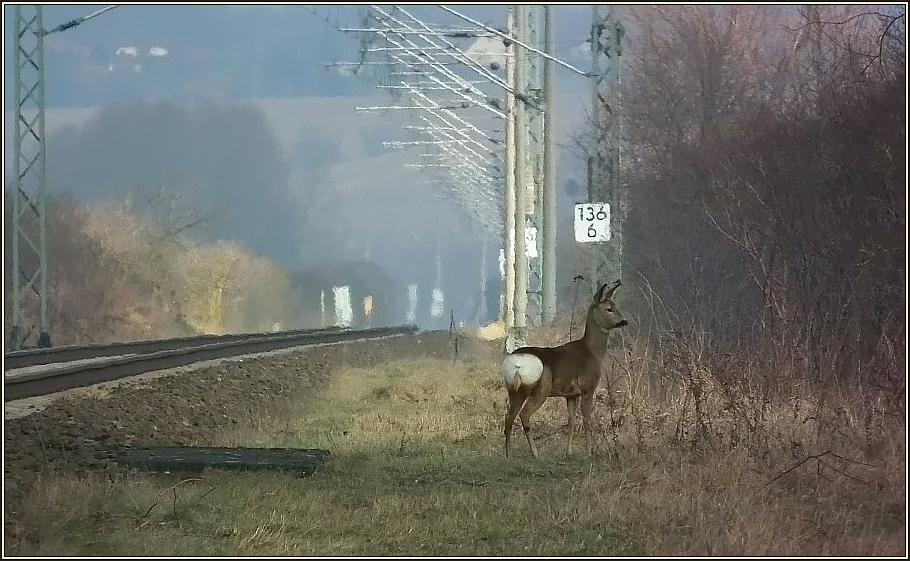 Bahn - Ricke