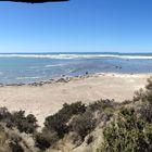 baia dei leoni marini Argentina