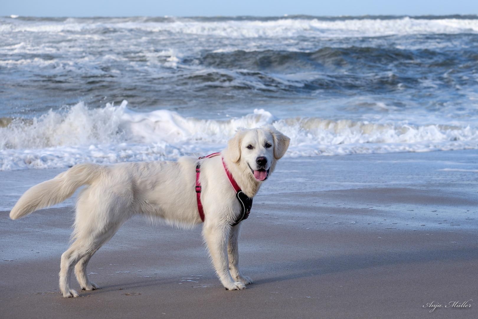 Bailey am Strand