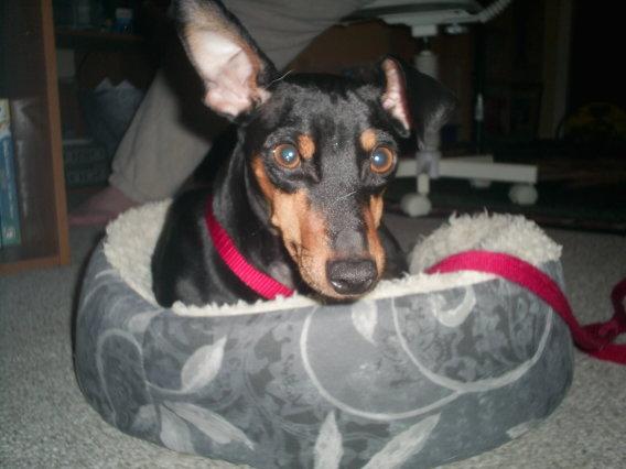 Bailey: my little man