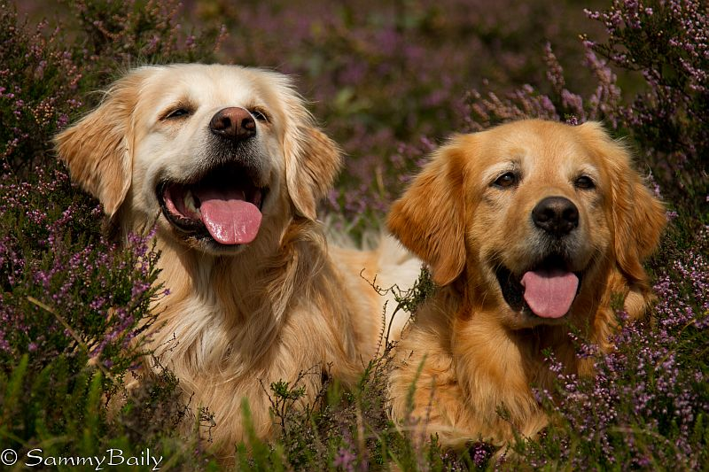 Baily & Sammy 2