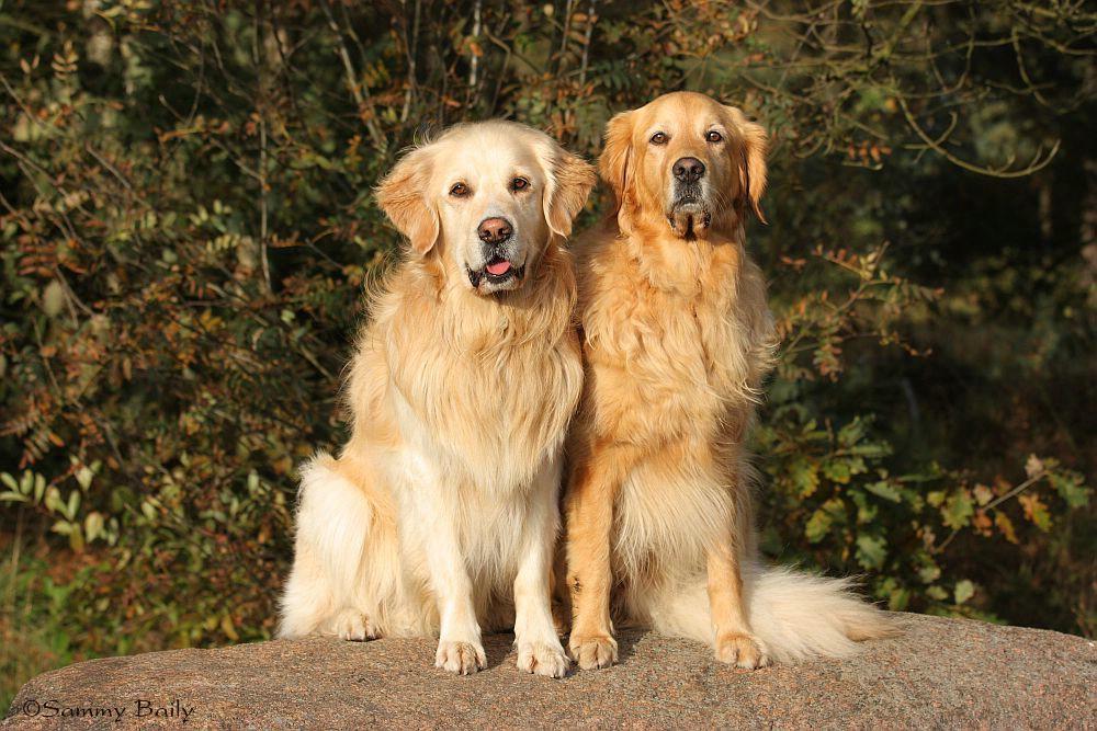 Baily und Sammy