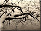 Bain de branches dans le Léman