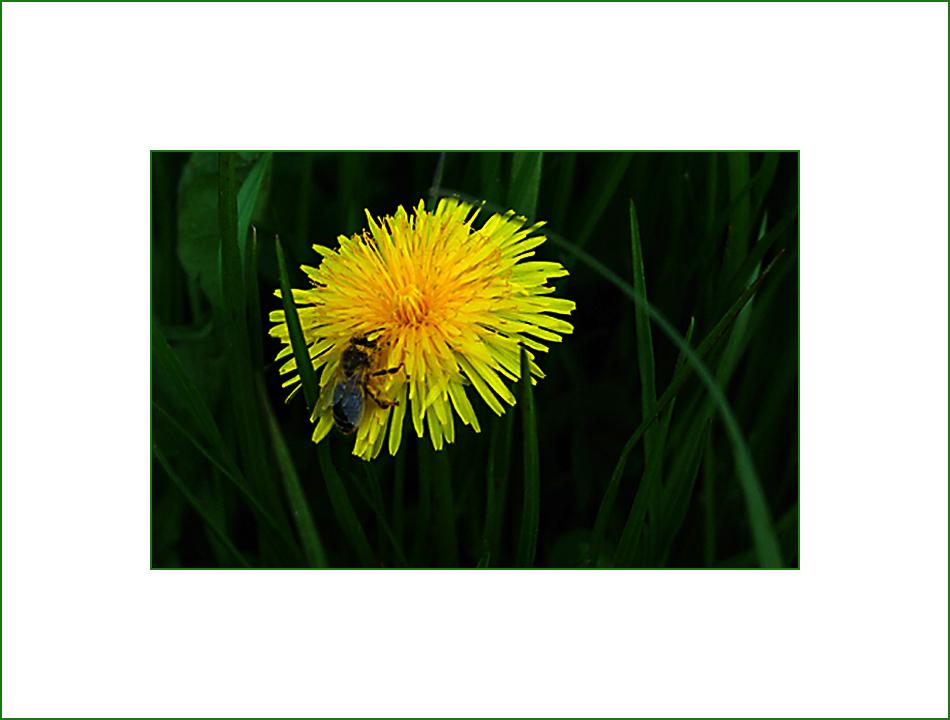 bain de pollen