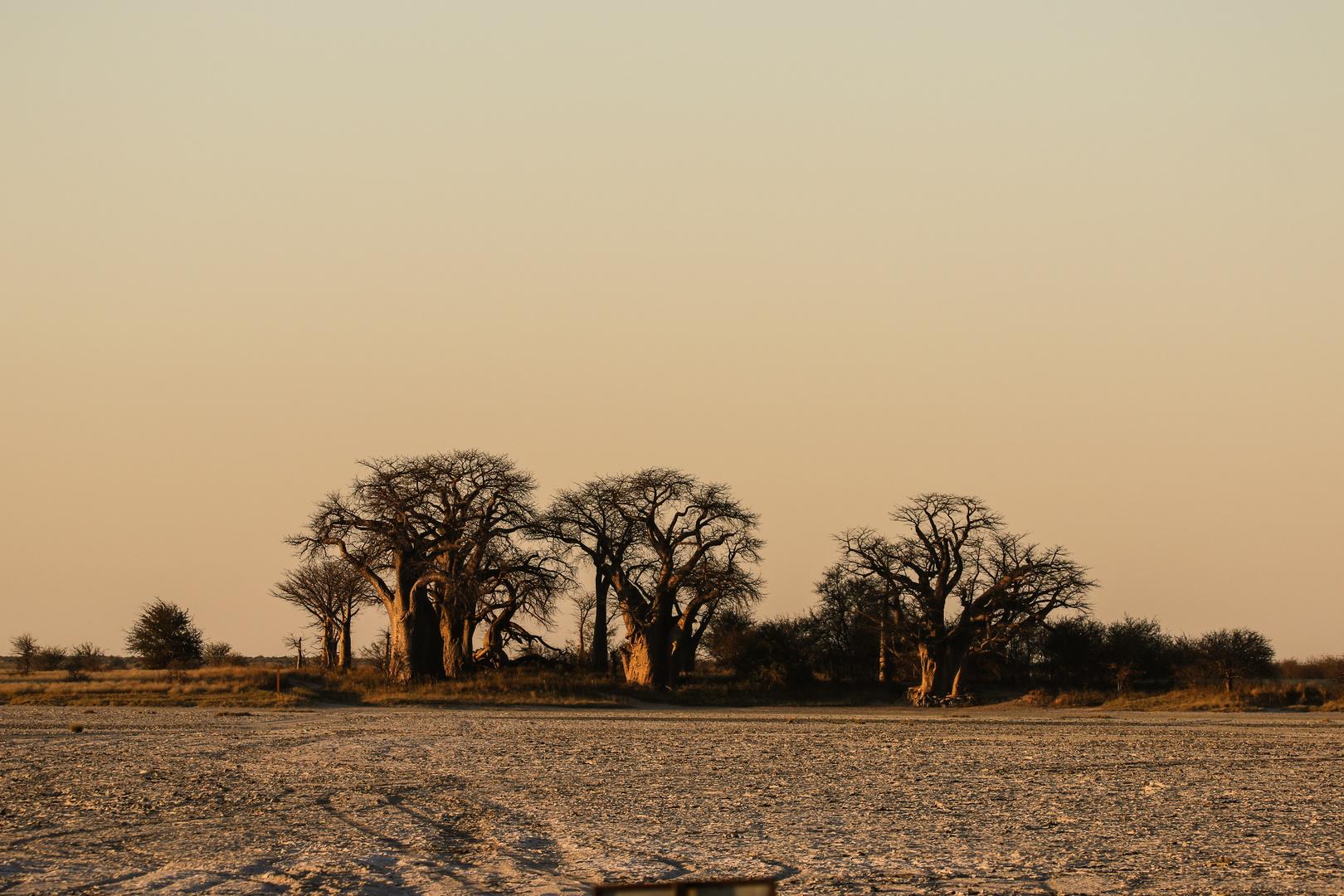Baines Boabab Nxai Pan National Park-173
