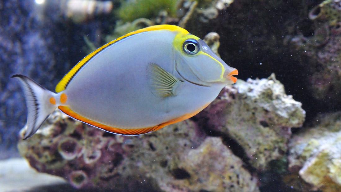 Bajo el agua 02