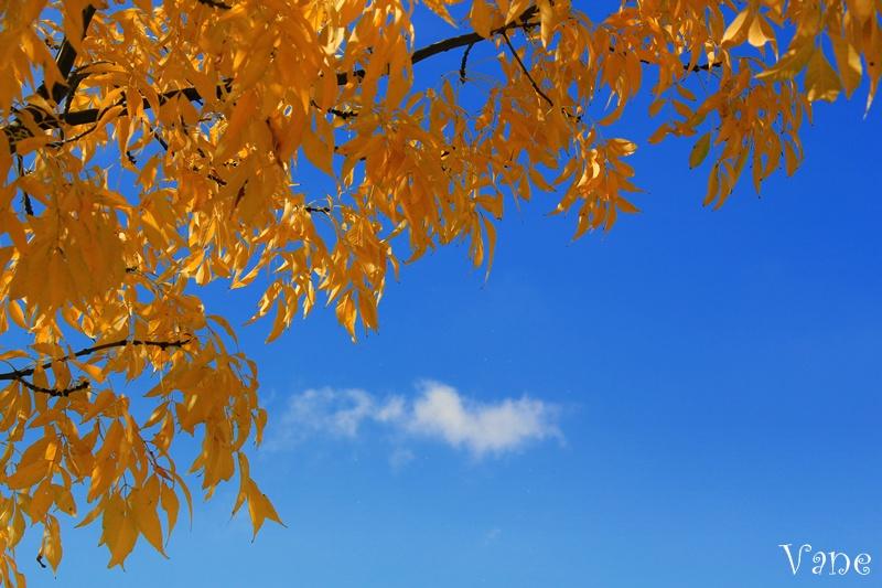 ... bajo el árbol de hojas amarillas...
