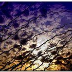 Bajo el mismo cielo..