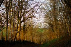 Balade au bois de Fau Timon