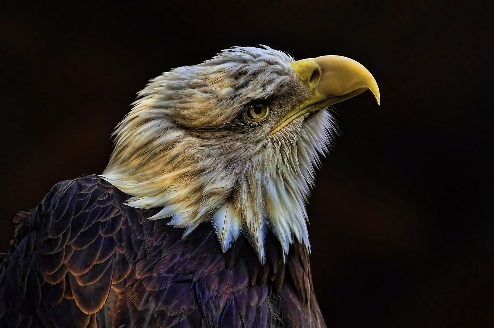 Bald Eagle in Indian Style