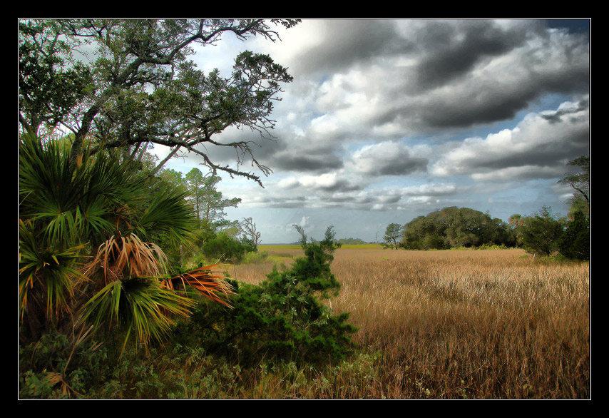 Bald Head Island Swamp