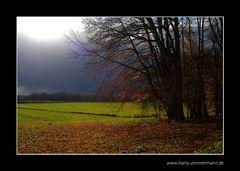 Bald ist der Herbst vorbei