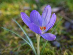 Bald ist Frühling