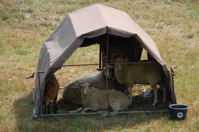 Bald ist wieder Campingzeit...