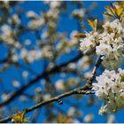 Bald kommt der Frühling