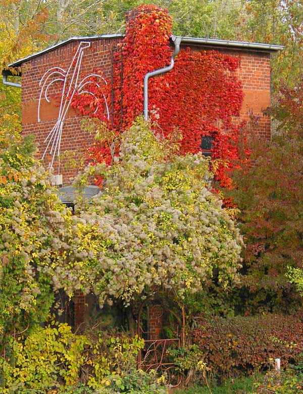 ... bald kommt der Herbst
