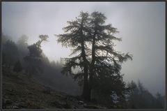 Bald löst sich der Nebel auf