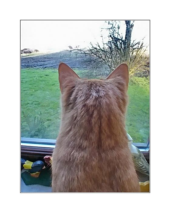 ... Baldrian (Baldi) ... his favorite freizeitbeschäftigung ..bird watching