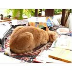 Baldrians afternoon nap (the art of sleeping on a table top)
