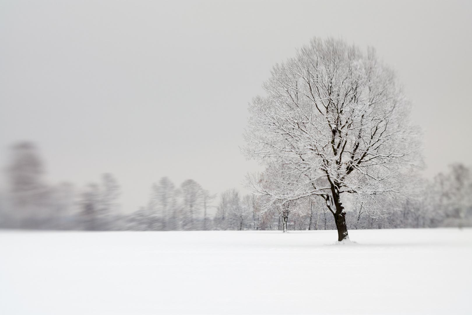 Balgacher Riet - der grosse Schnee 2012