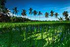 Bali - Die grüne Insel