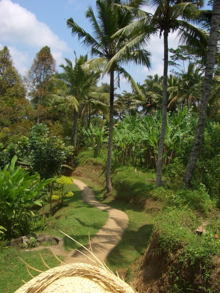 Bali Hinterland von einem Elefanten aus