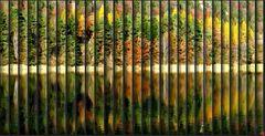 Balken im Herbst