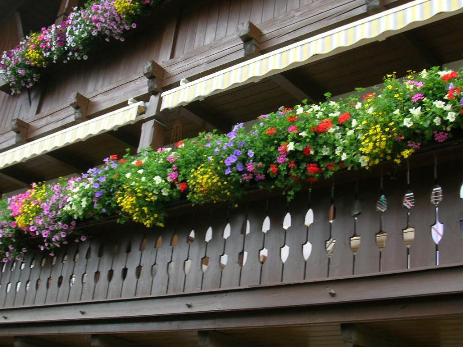 Balkon Blumen Foto Bild Landschaft Garten Parklandschaften