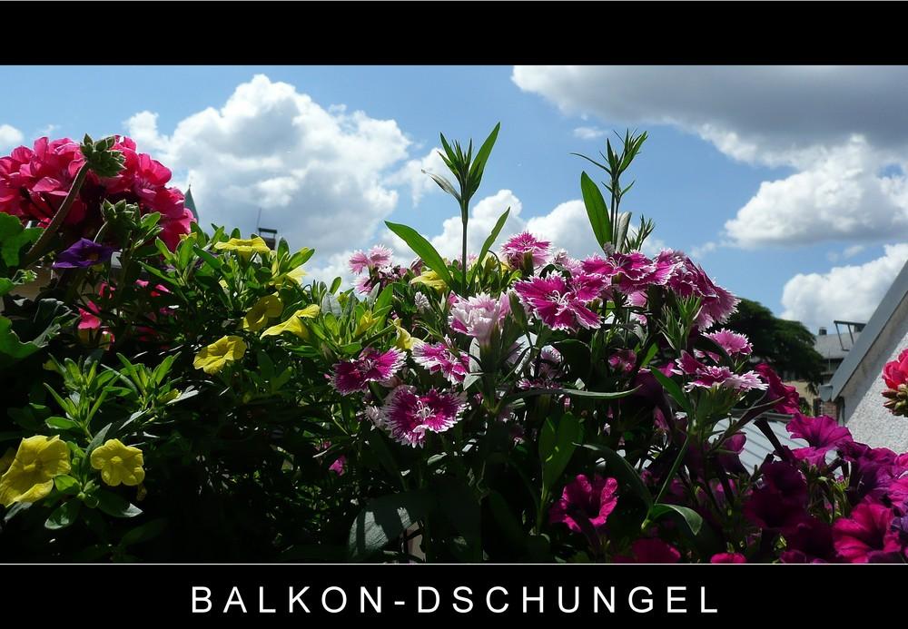 Balkon-Dschungel