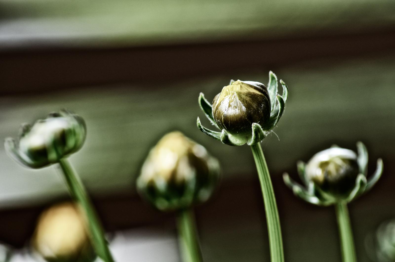 Balkon plants