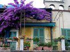 Balkonpflanzen am Gardasee
