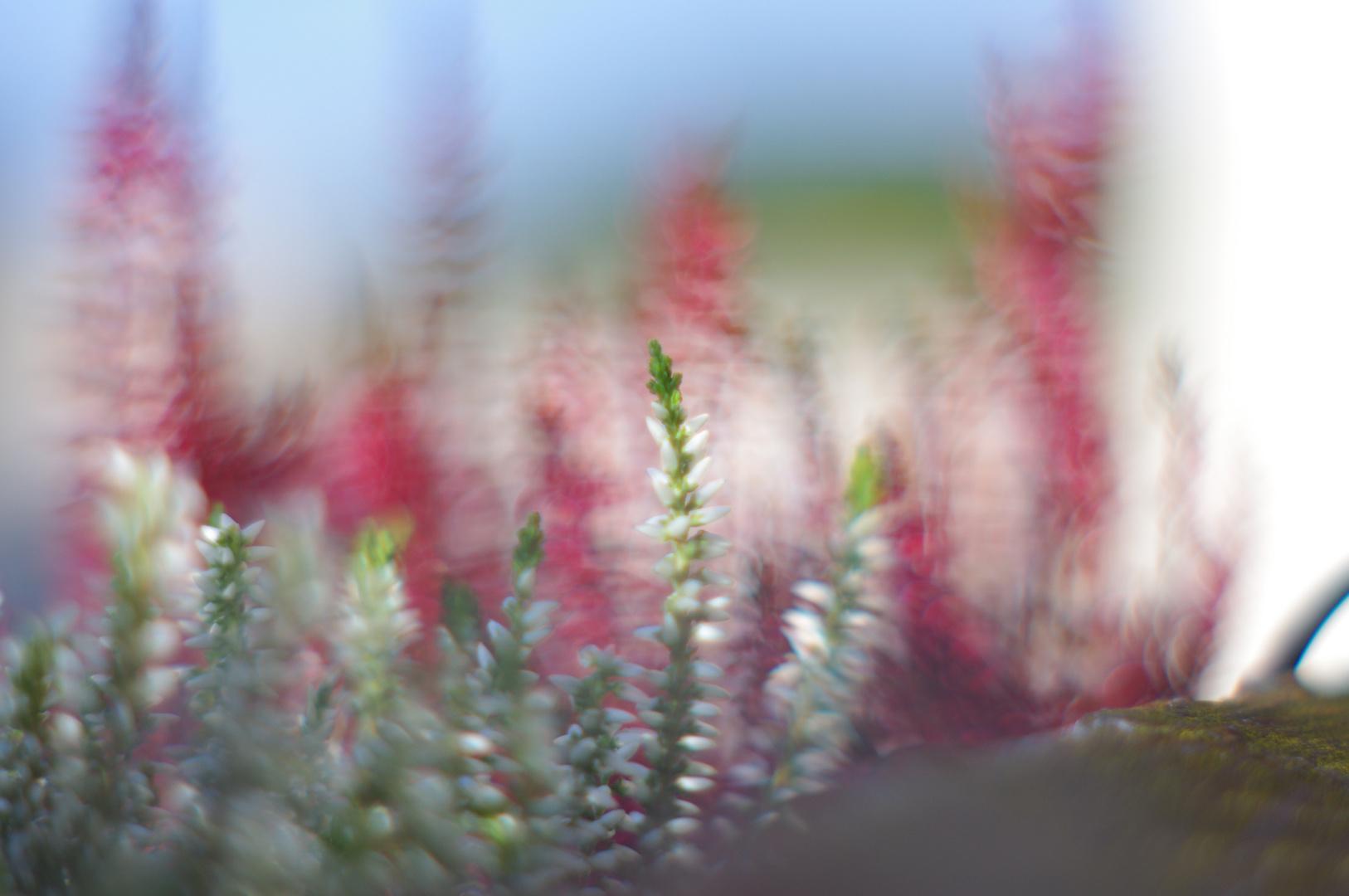 Balkonpflanzen mit Porst 1.2 Blende