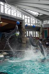 Ballspiel der Delfine -