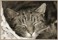 Balu beim Mittagsschlaf