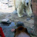 Balu und der Bär