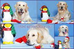 Balu wünscht frohe Weihnachten