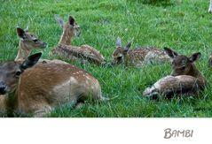 Bambi-für einen guten Freund!