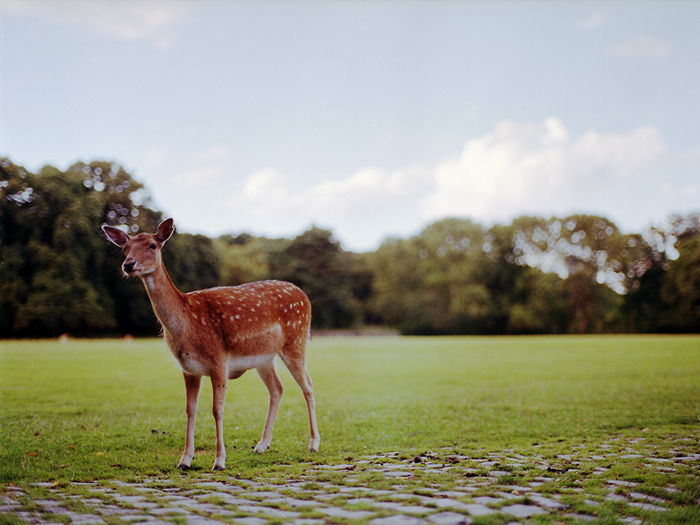 bambi in wonderland