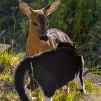 Bambi trifft Stubentiger