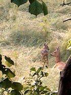 Bambi und seine Mama