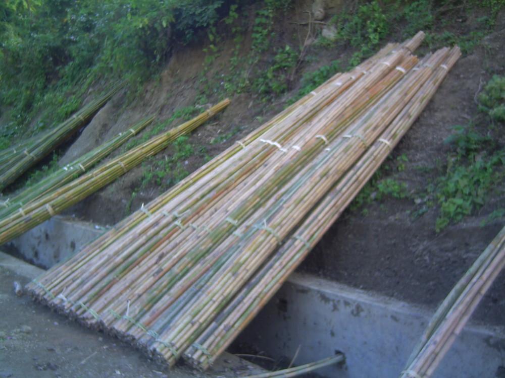 Bamboo in Bandarban