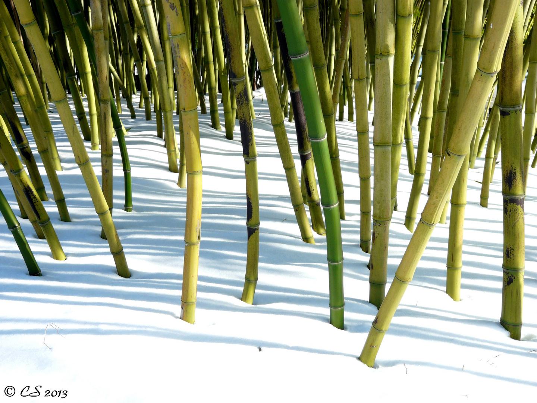 Bambooo...