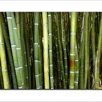 Bambous !