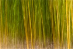 Bambù colore