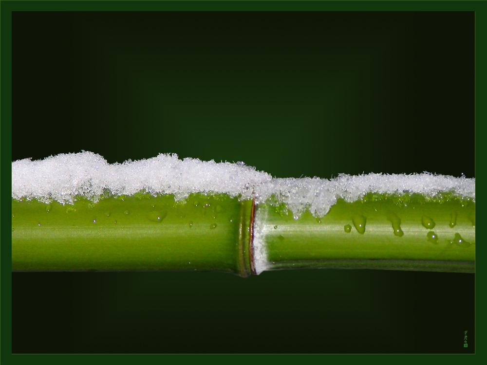 Bambus flirtet mit Schnee.