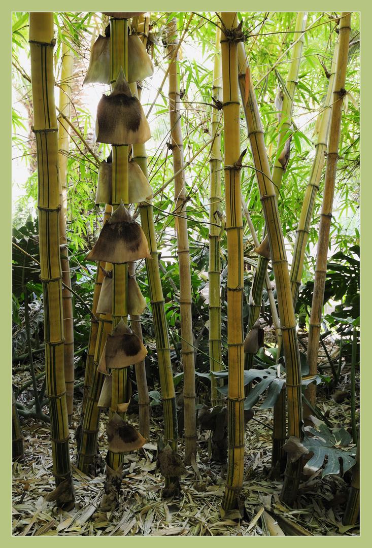 Bambus im Garten Majorelle