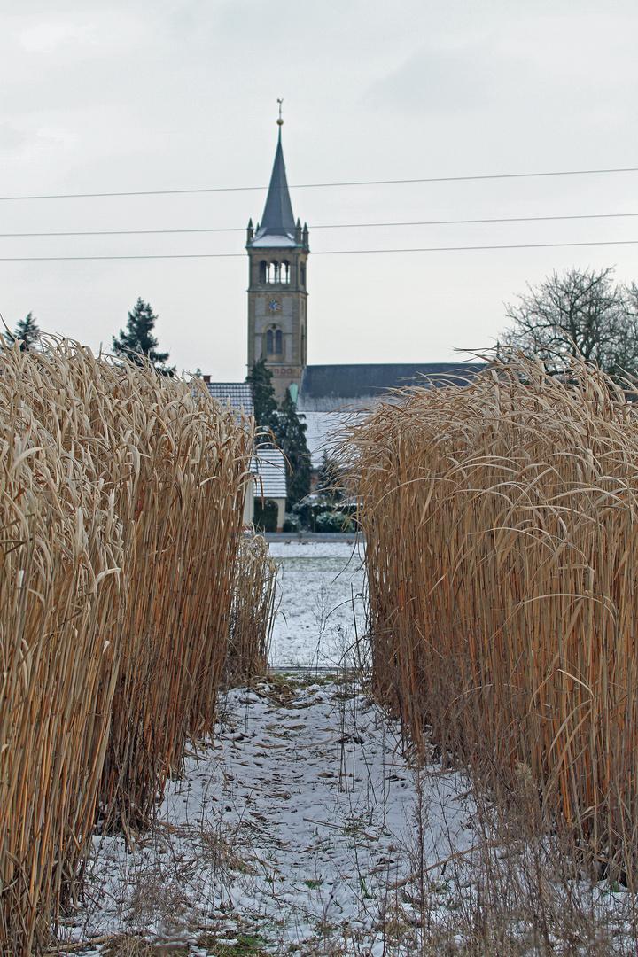 Bambus Im Winter Foto Bild Pflanzen Pilze Flechten Pflanzen